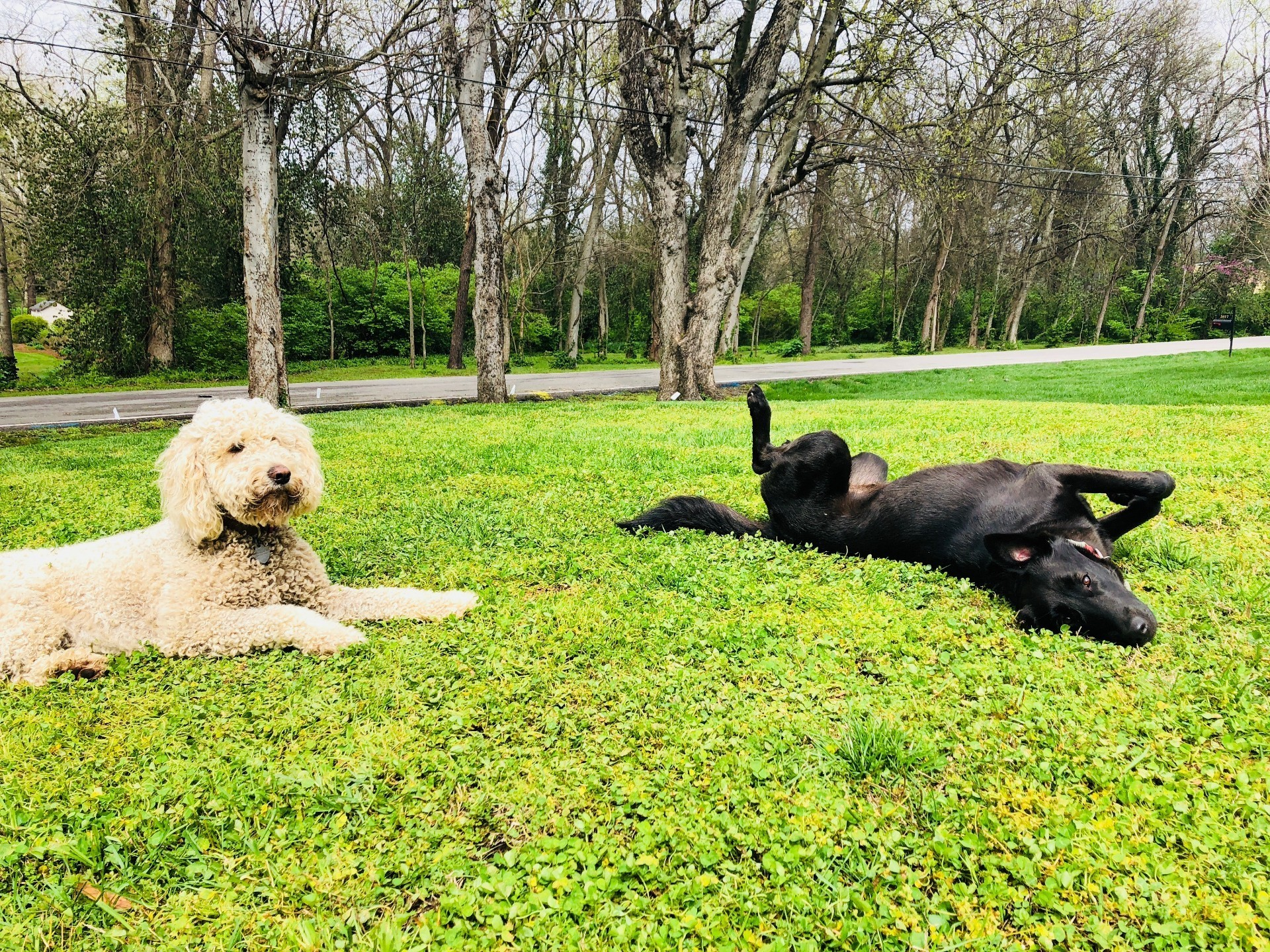 Customer Reviews Testimonials And Ratings For Outdoor Pet