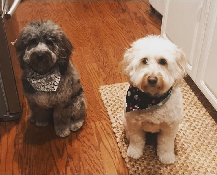 Heaven on Earth Goldendoodles