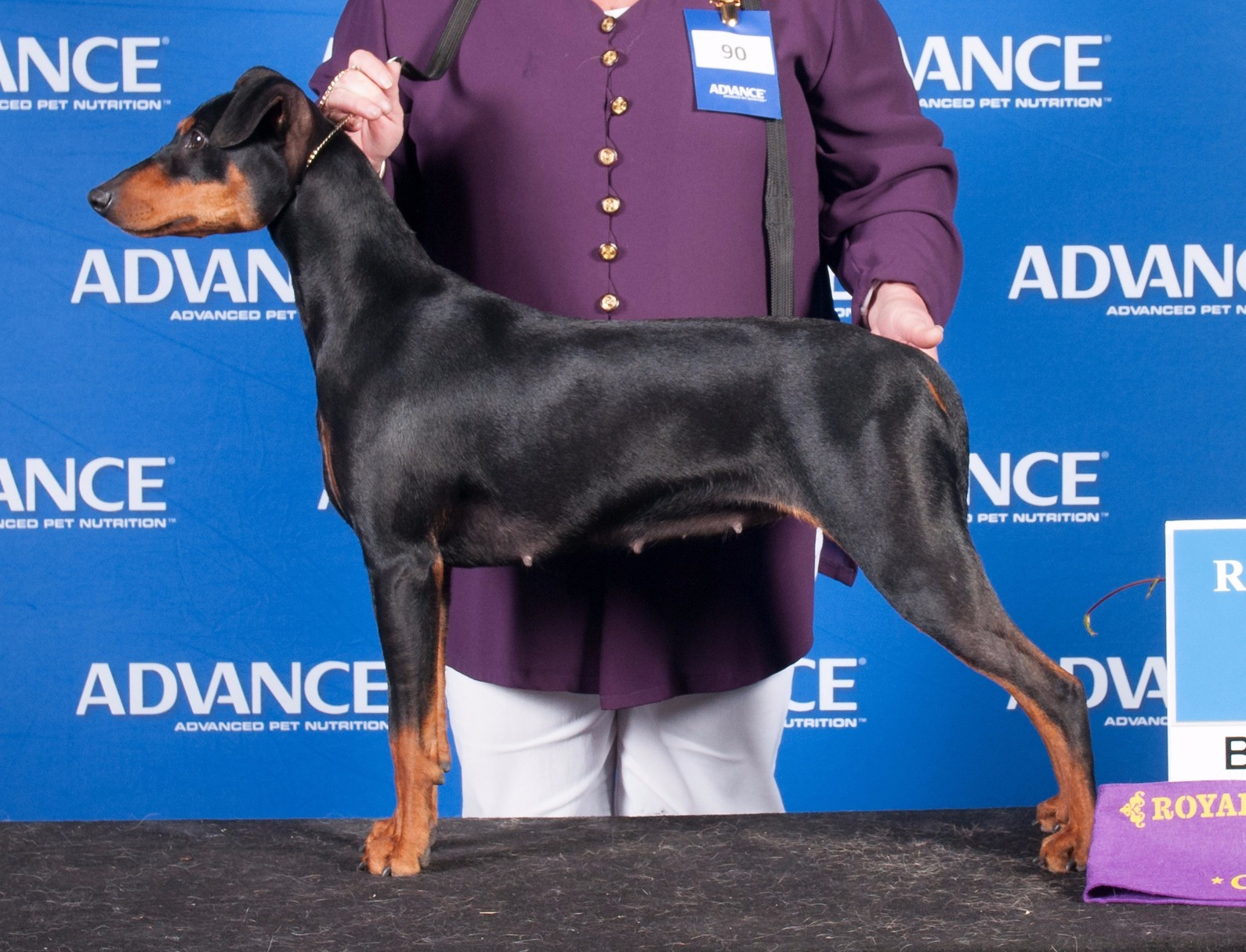 Millie - Aust Ch Masterkarn Myths N Legends-BOB Ekka 2015
