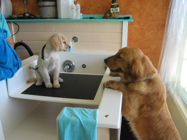 My website we believe that a clean pet is a healthier happier pet and that excellence in nutrition is the foundation for our pets to live a long life solutioingenieria Image collections