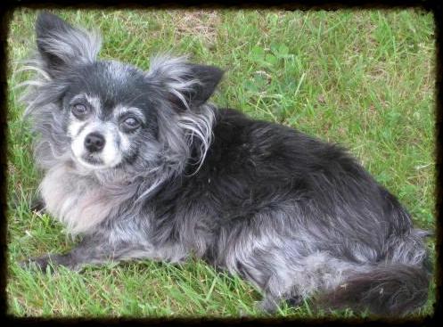Lola, 18 yrs old