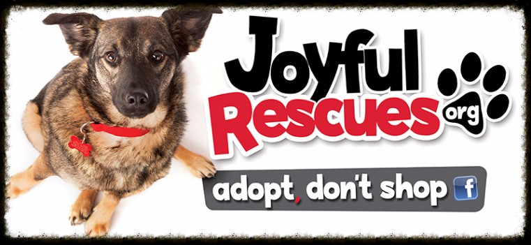Adoptable Pets at Joyful Rescues