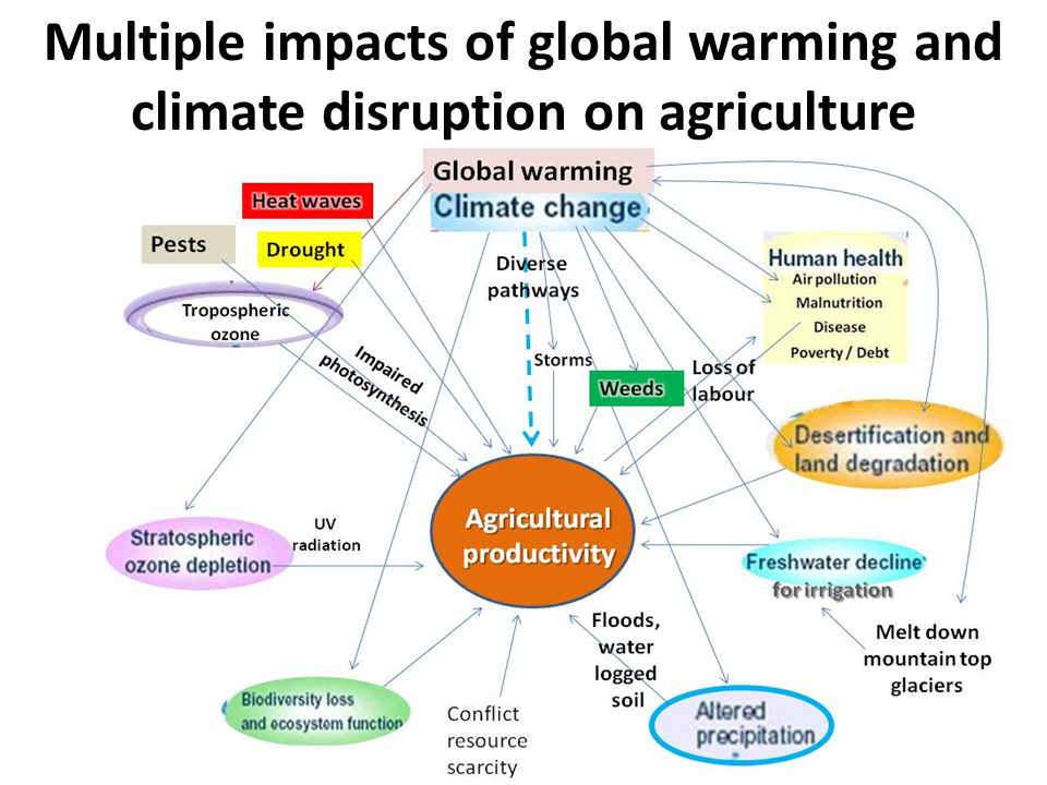 climate change on food security environmental sciences essay Bibliography: adejuwon j 2006 food security, climate variability and climate change in sub saharan west africa final report submitted to appraisals of impacts and adaptations to climate change ( aiacc ) , project no af 23.
