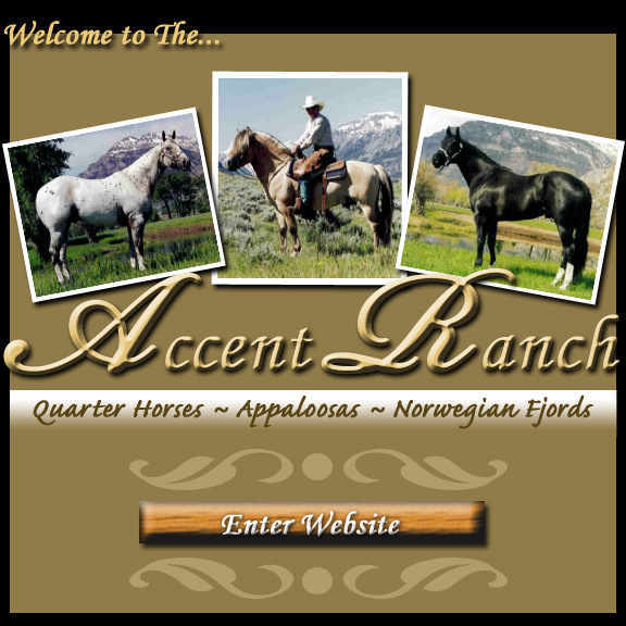 Accent Ranch Quarter Horses Appaloosa's Norwegian Fjord's Powell Wyoming