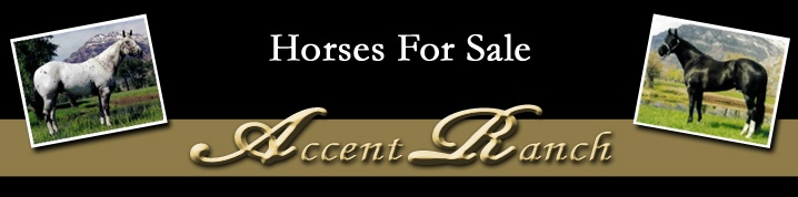 Accent Ranch Horses For Sale