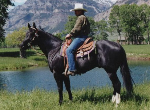 Zip's Commander Black Quarter Horse Stallion