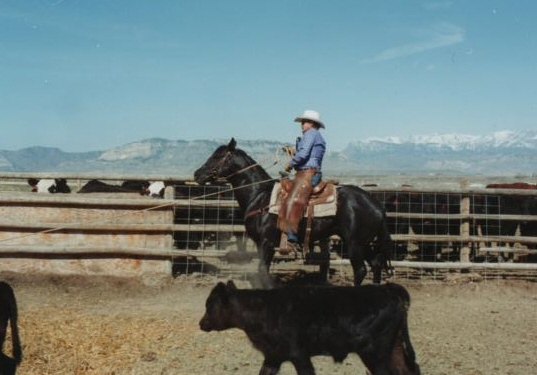 Accent Ranch Branding Black Quarter Horse Stallion