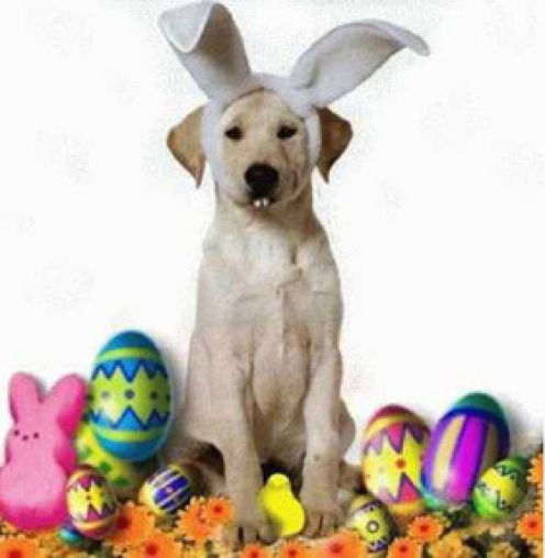 Yeah, sure.... I AM the Easter Bunny!  That's right.......