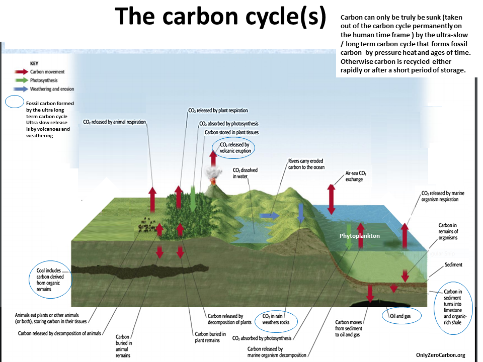 essays on carbon