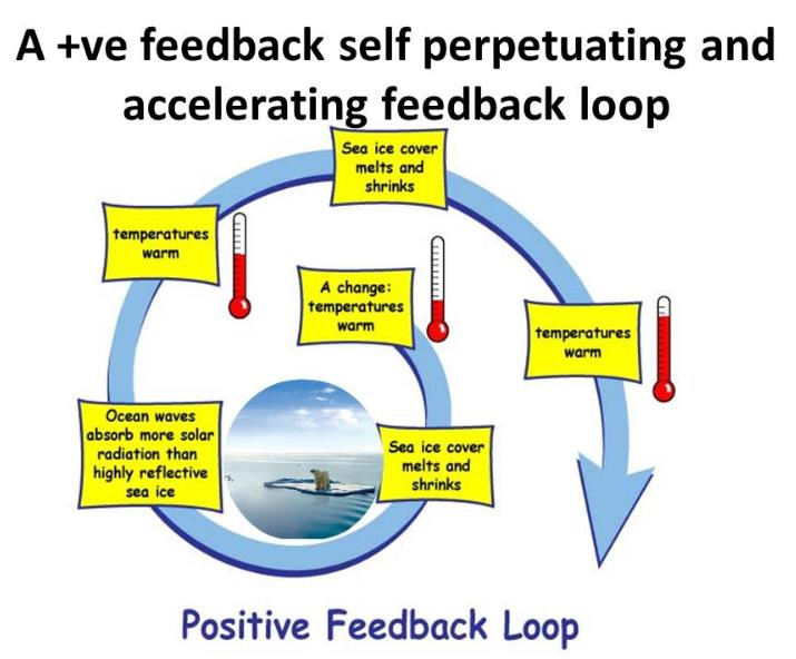 feedback loops essay A bbc bitesize secondary school revision resource for higher biology on homeostatic control: negative feedback and osmoregulation exam skills, adh.