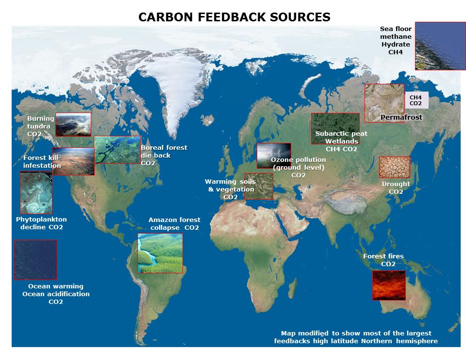 Carbonfeedbacksg sciox Images