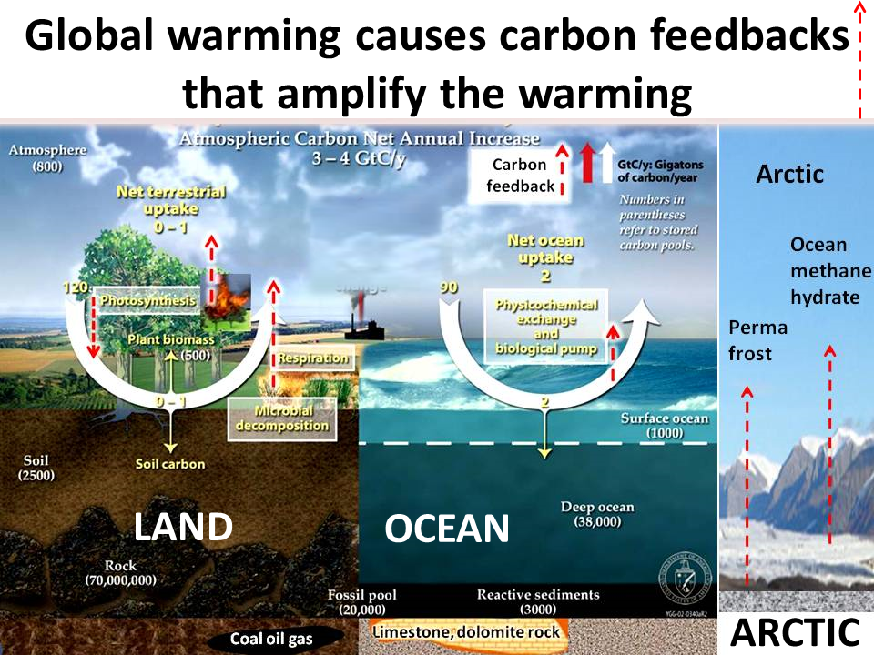 Image Gallery ocean acidification carbon cycle