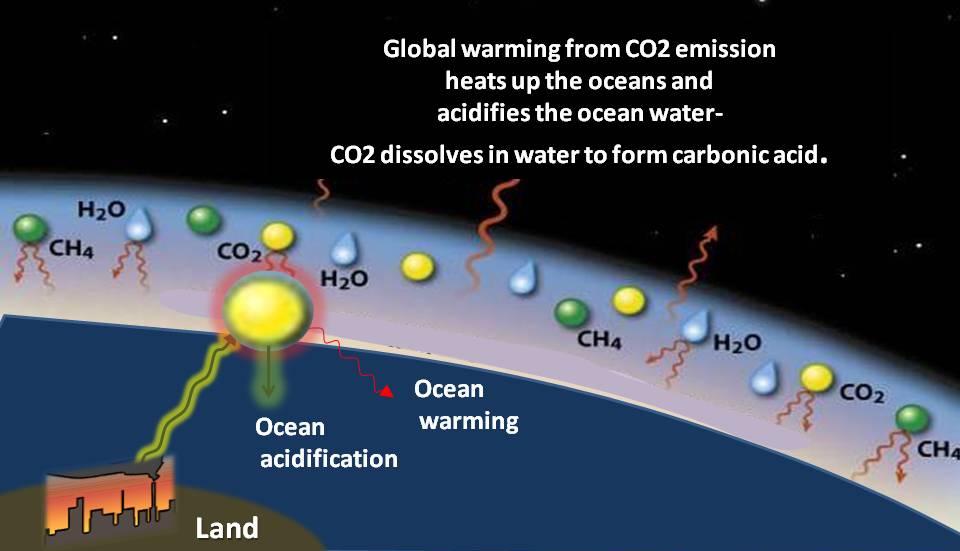 Carbon Feedbacks