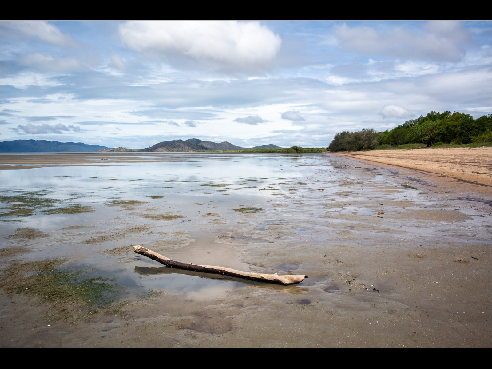 Driftwood on the beach in Townsville Queensland
