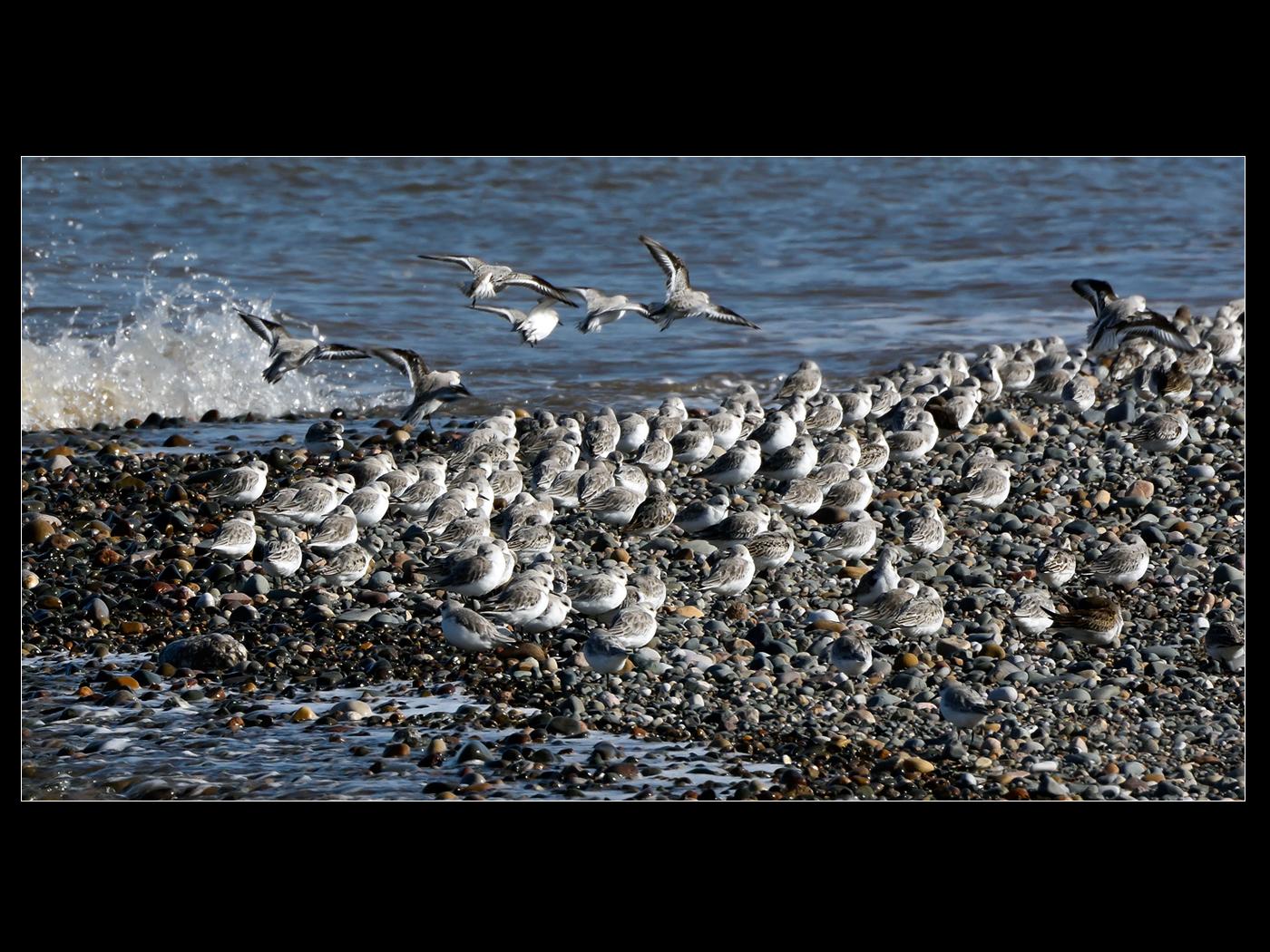 sanderlings Rooall Point