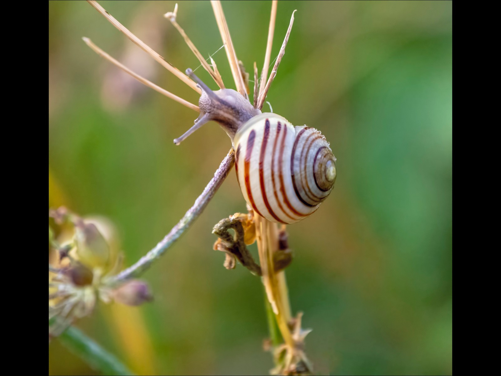 Baby Snail foraging