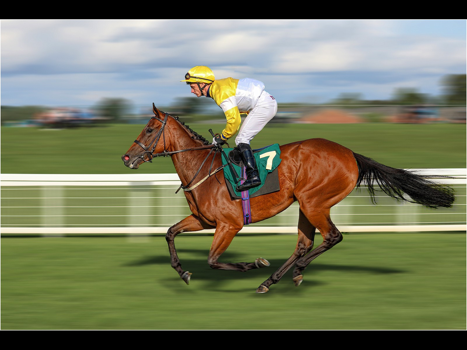 Thoroughbred, Going Down to the Start