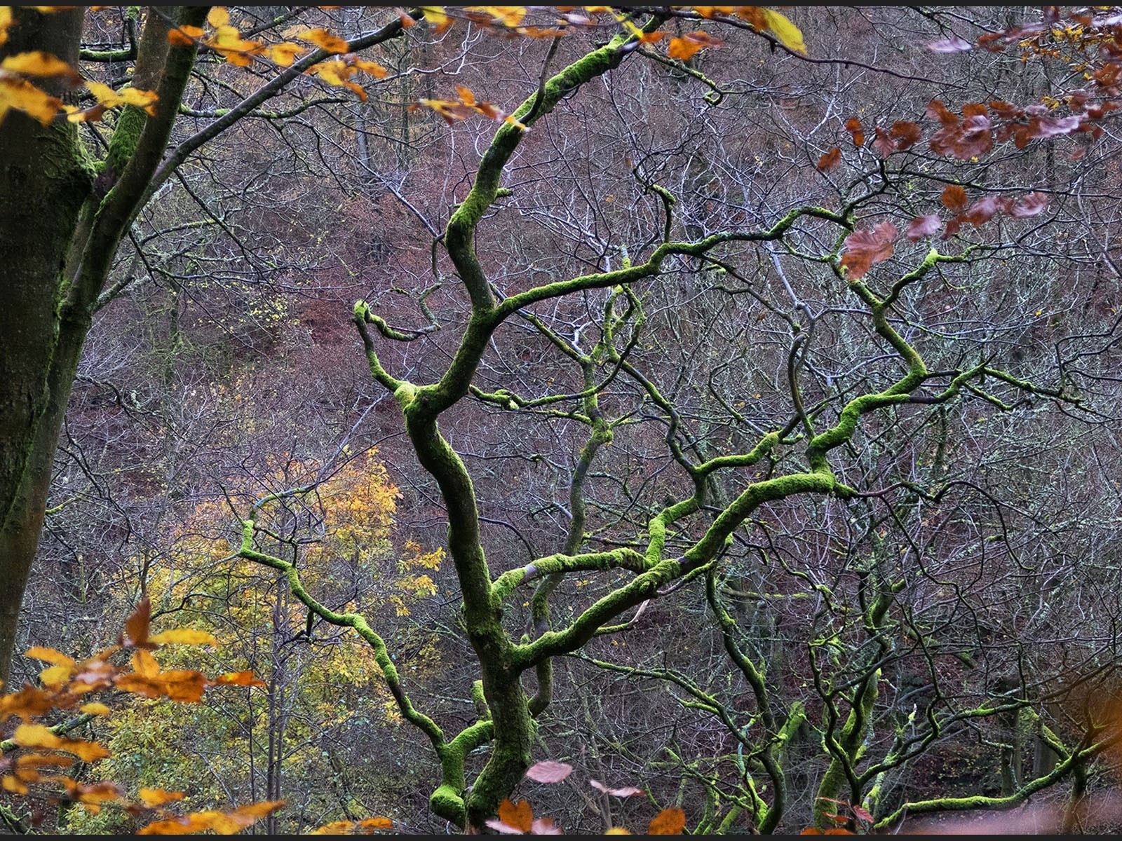 IMG_2119 green moss tree hardcastle