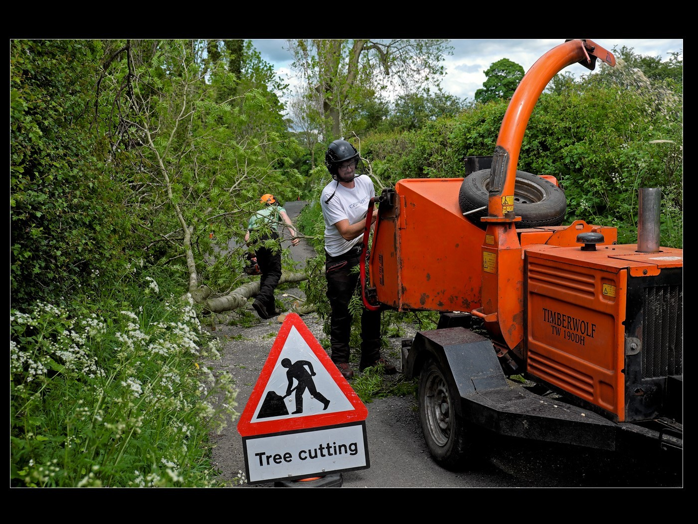 Tree Felling on Downham's Lanes