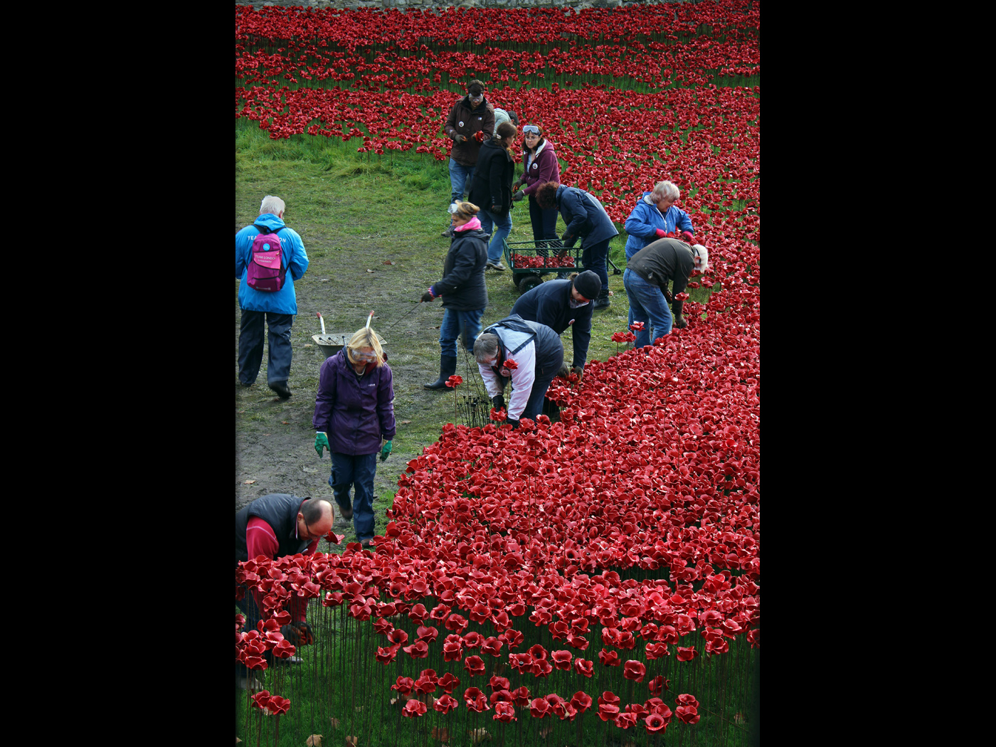 Dismantling The Display of Remembrance Poppies Tower of London jpg