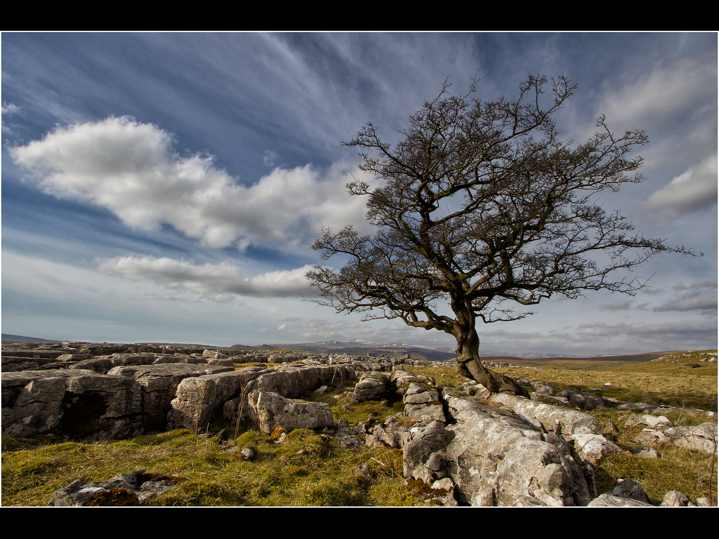 Lone Tree at Winskill