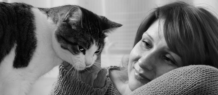 Petvalue Cat Adoptions