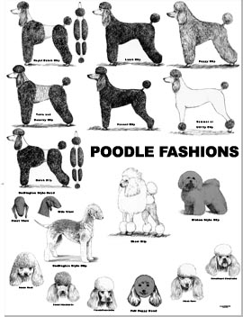 1000 images about cas on pinterest poodles poodle for Action clips grooming salon