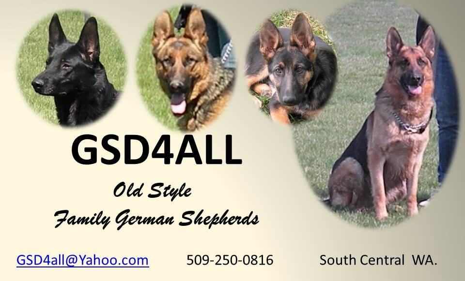 Old Style Family German Shepherds