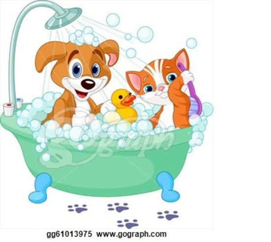 Dog Grooming And Spay Columbus Ohio