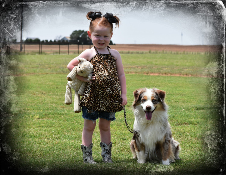 Circle 5 Miniature & Toy Australian Shepherds