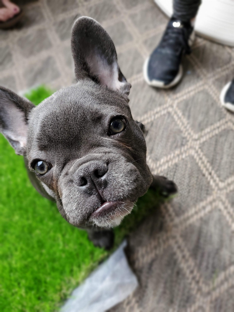 Best in home dog training in Arizona East Valley