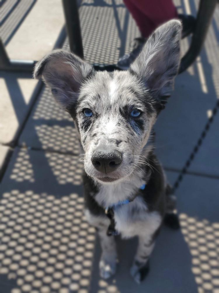 Best dog training in Arizona East Valley