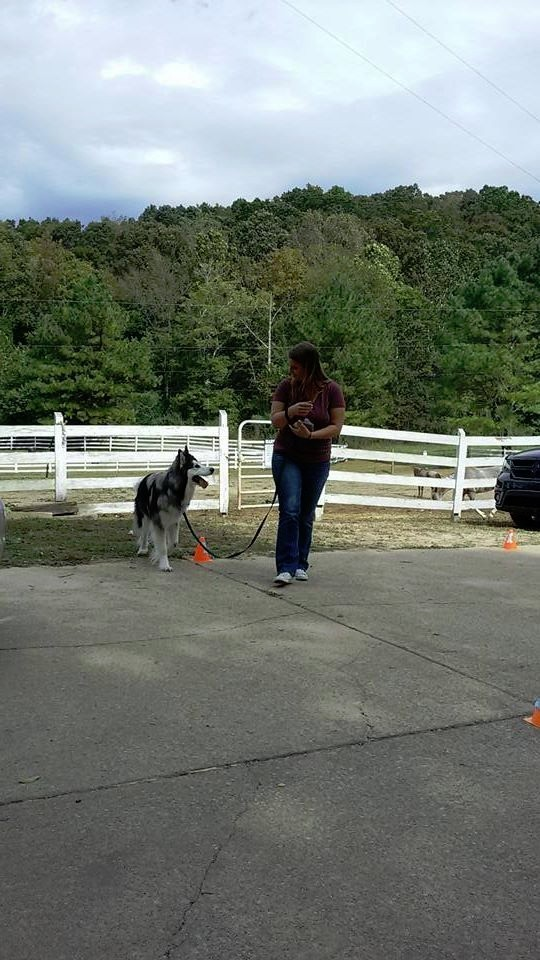 Dog Training Online Course Enroll Now and Start Learning