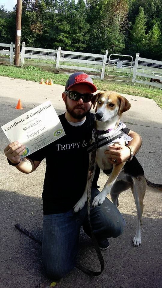 How to train your own dog to be a service dog