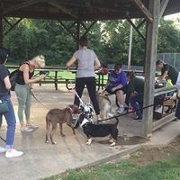 Canine online group classes