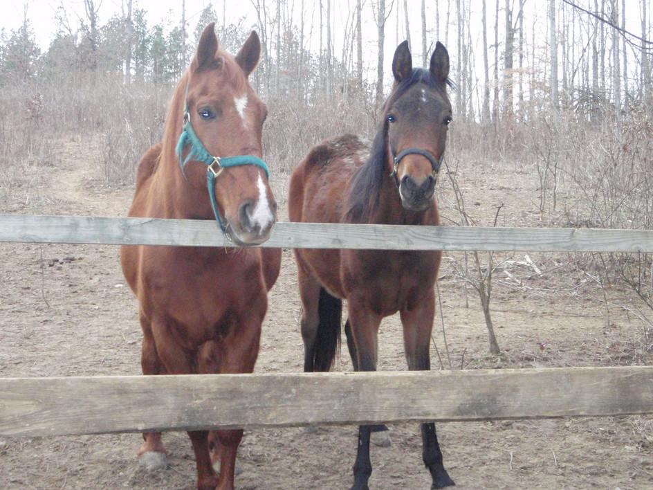 Legend Acres Horse Boarding