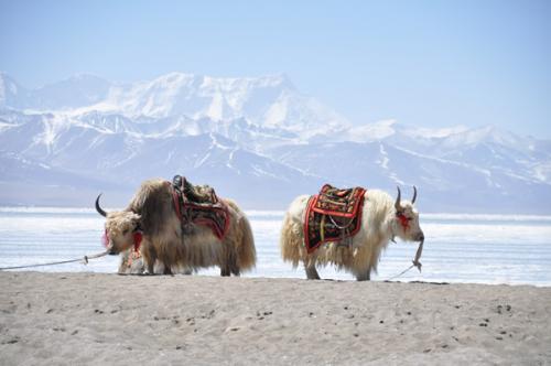 Tibettourguide - Tibet tours