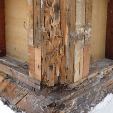 Termite Inspection Image