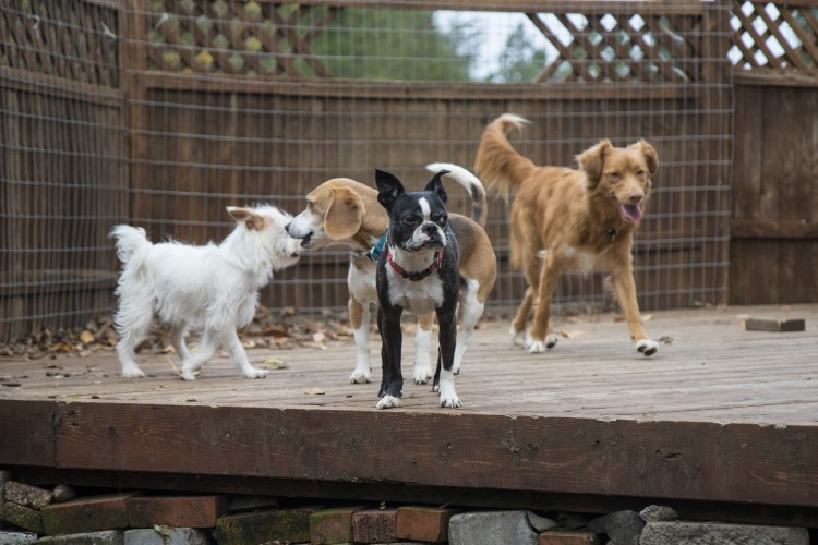 Tall Oaks Dog Day Care And Boarding Dog Kennel Resort