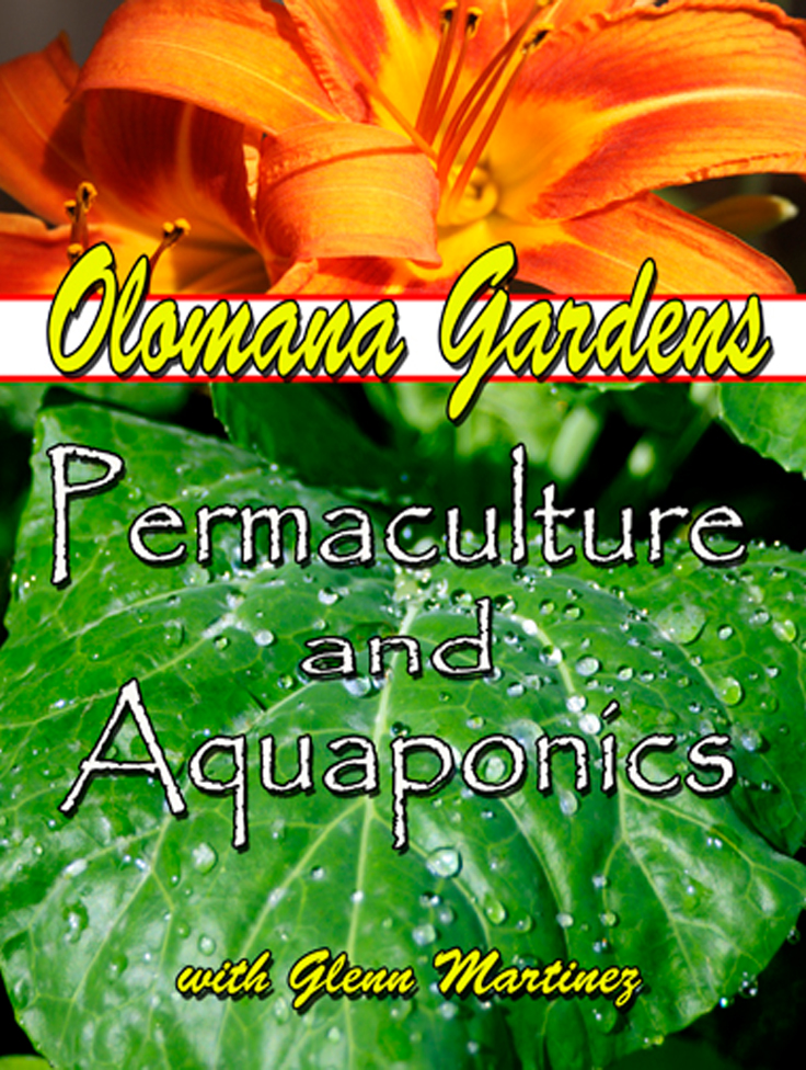 Permaculture, Aquaponics, Agriculture, Farming, Organic Food, Organic gardening, Olomana Gardens, Glenn Martinez, Vegetables, Eco System, Organic System in Hawaii, Farming in Hawaii, Healthy Food, Worms, Food waste, Synergy