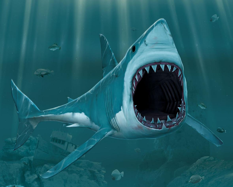 Marinepowerheads - Requin dessin ...