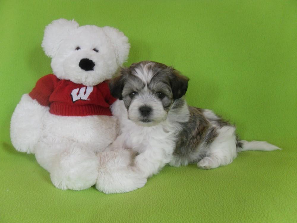 Teddy Bears 1