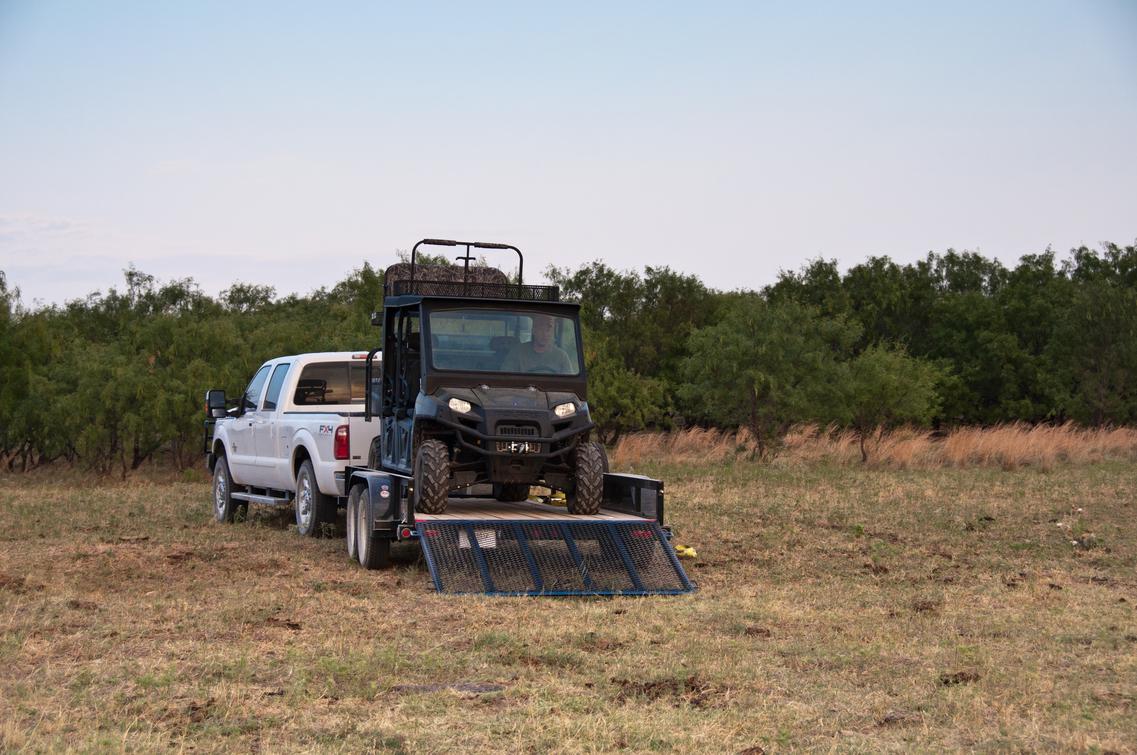 DFW Quail Hunting