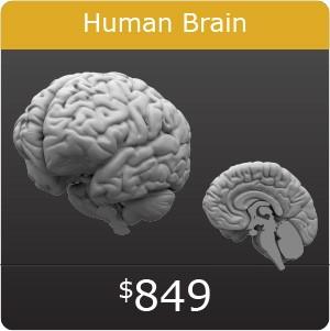 Solidworks Human Brain