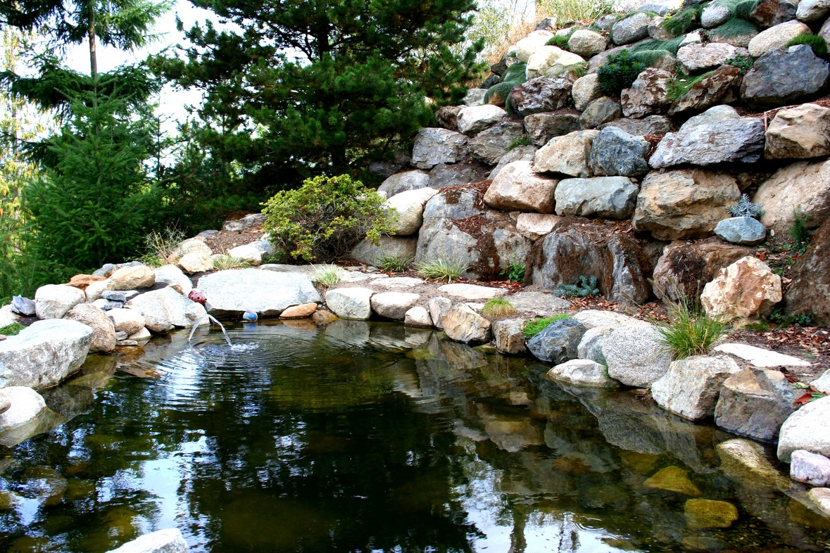 Pond and Rockery