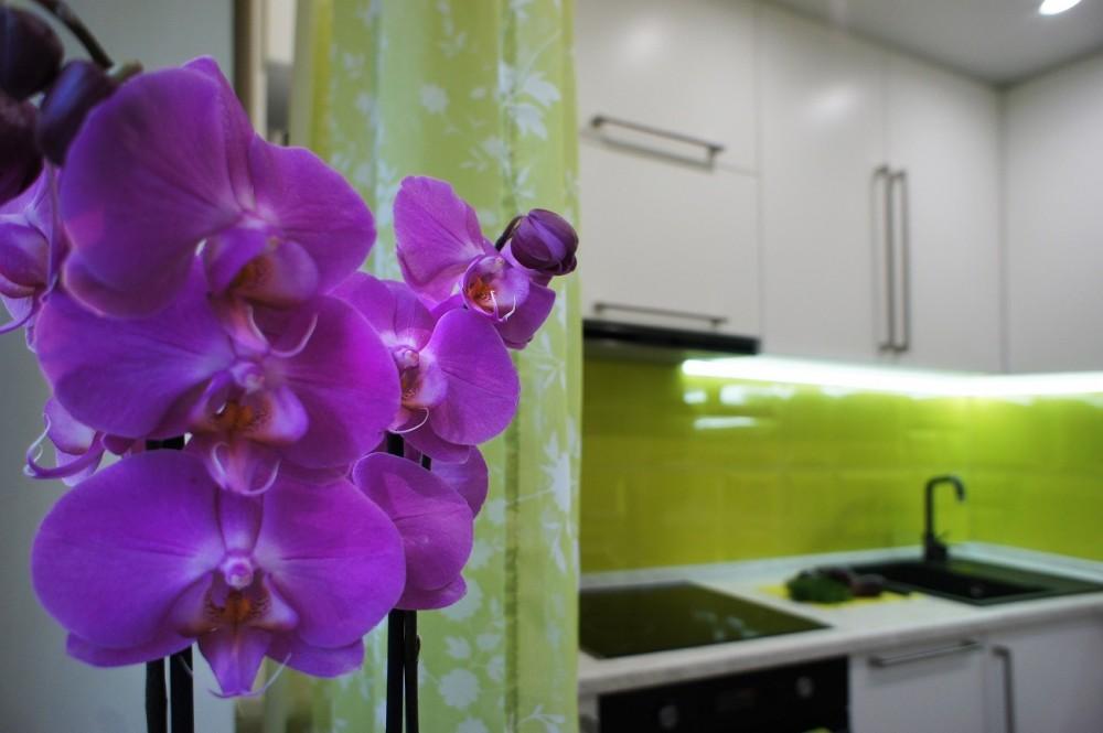 Орхидея на кухне