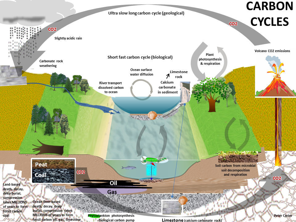 Carbon cycle 2carboncycles672015jjg ccuart Image collections