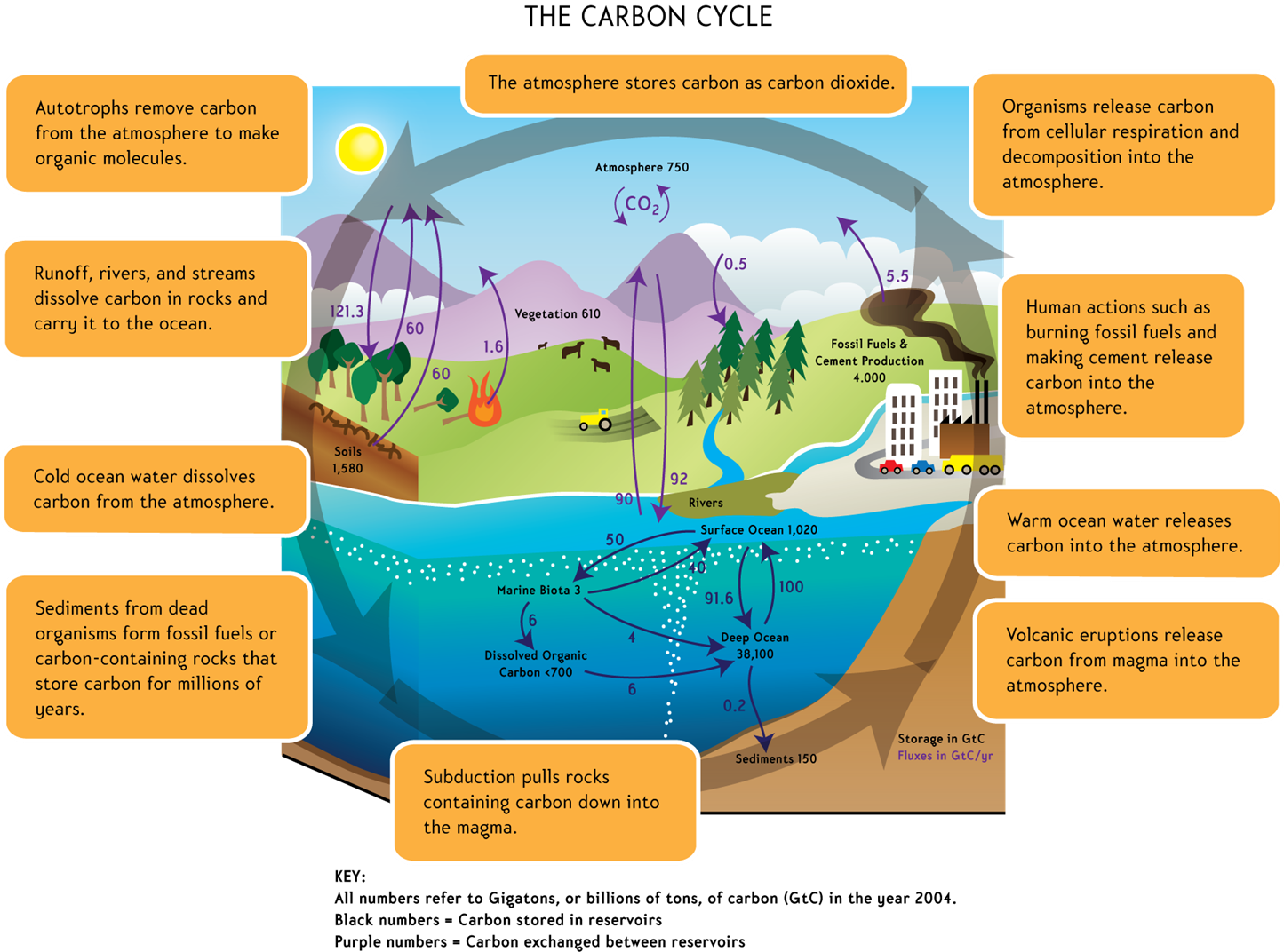 human activities global warming and climate change environmental sciences essay Short essay on climate change and global warming are referred to as climate change human activity has had a large impact on the global climate system.