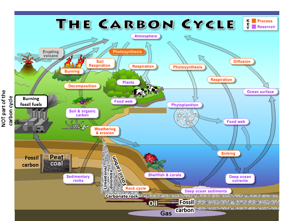 Carbon Cycle Related Keywords & Suggestions - Carbon Cycle Long Tail ...