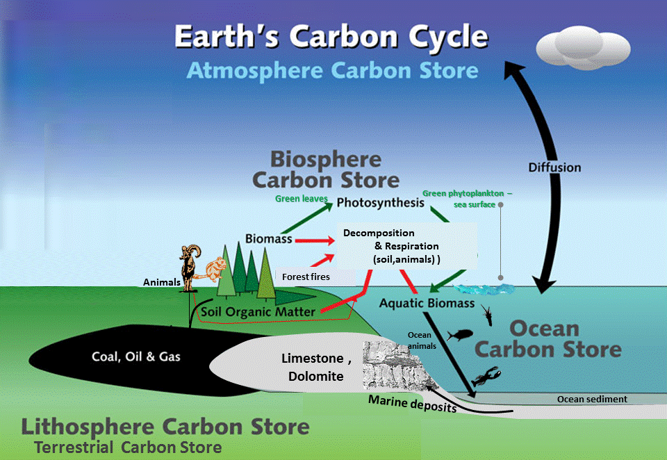 Carbon Cycle (Carbon Mineralization)